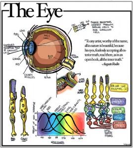 """איור עין ע""""י זכרי ויץ'  http://www.flickr.com/people/labguest/"""